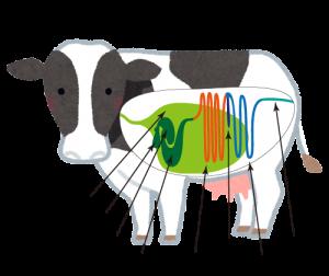 牛の消化管と部位名