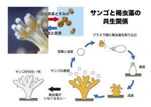syou20130712_Figure2_Japanese