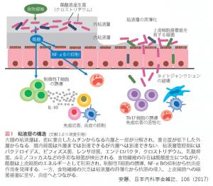 腸の粘液層の構造