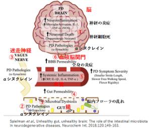 腸内フローラから始まる脳炎症仮説