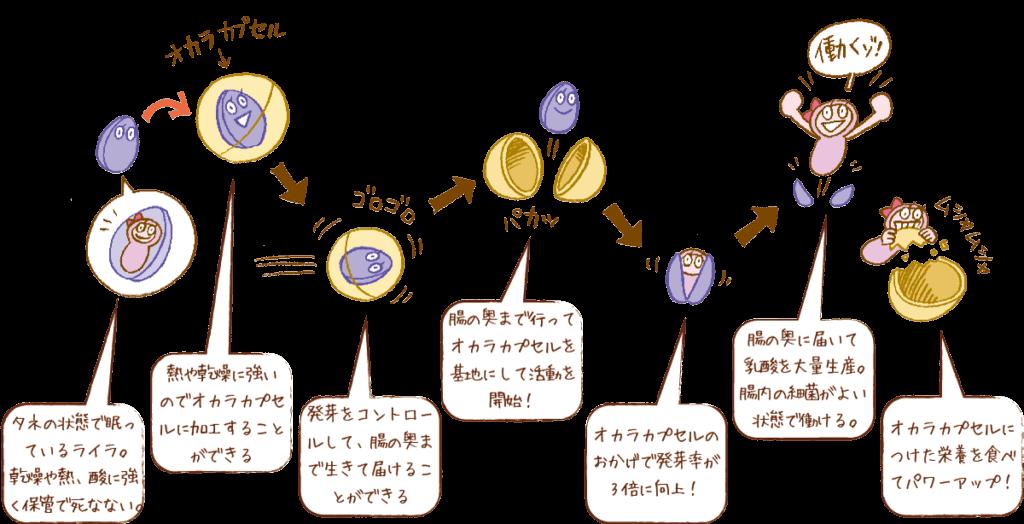 ライラック乳酸菌の作用