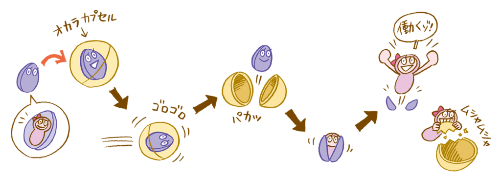 ライラック乳酸菌とオカラカプセル